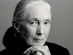 Jane Goodall | Profile on TED.