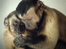 Frans de Waal: Moral behavior in animals