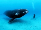 Brian Skerry revela a glria - e o horror - do oceano