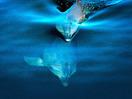 Peter Tyack: The intriguing sound of marine mammals