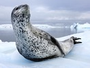 Paul Nicklen: Tales of ice-bound wonderlands