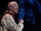 Jane Goodall ayuda a los humanos y los animales a vivir juntos