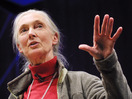 Jane Goodall: What separates us from chimpanzees?