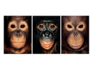 Steven Wise: Chimps have feelings and thoughts. They should also have rights