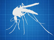 Hadyn Parry: Re-desenhando mosquitos para combater doenas