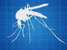 TED: Hadyn Parry: Re-engineering mosquitos to fight disease - Hadyn Parry (2012)