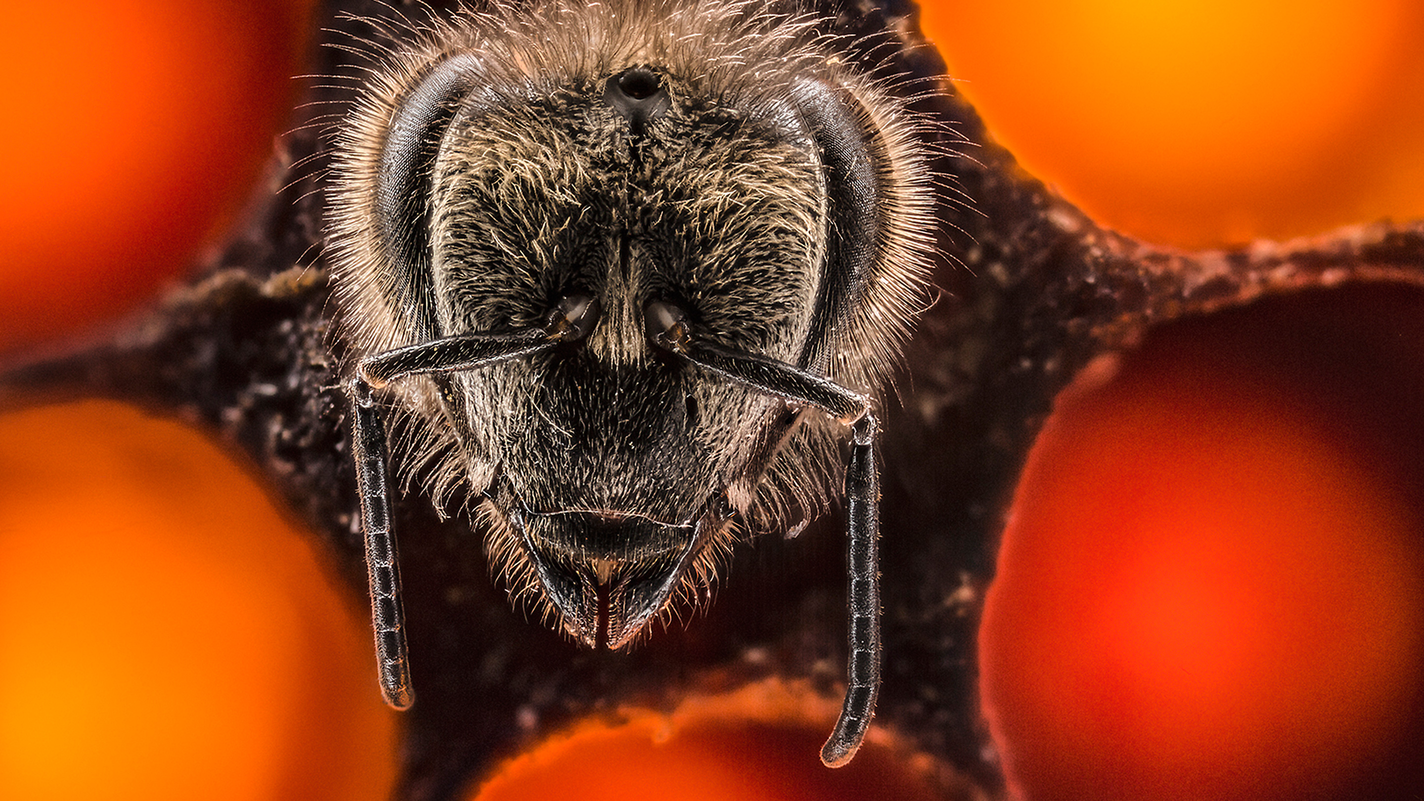 Anand Varma: A thrilling look at the first 21 days of a bee's life thumbnail