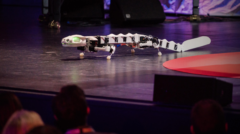 Auke Ijspeert: A robot that runs and swims like a salamander thumbnail