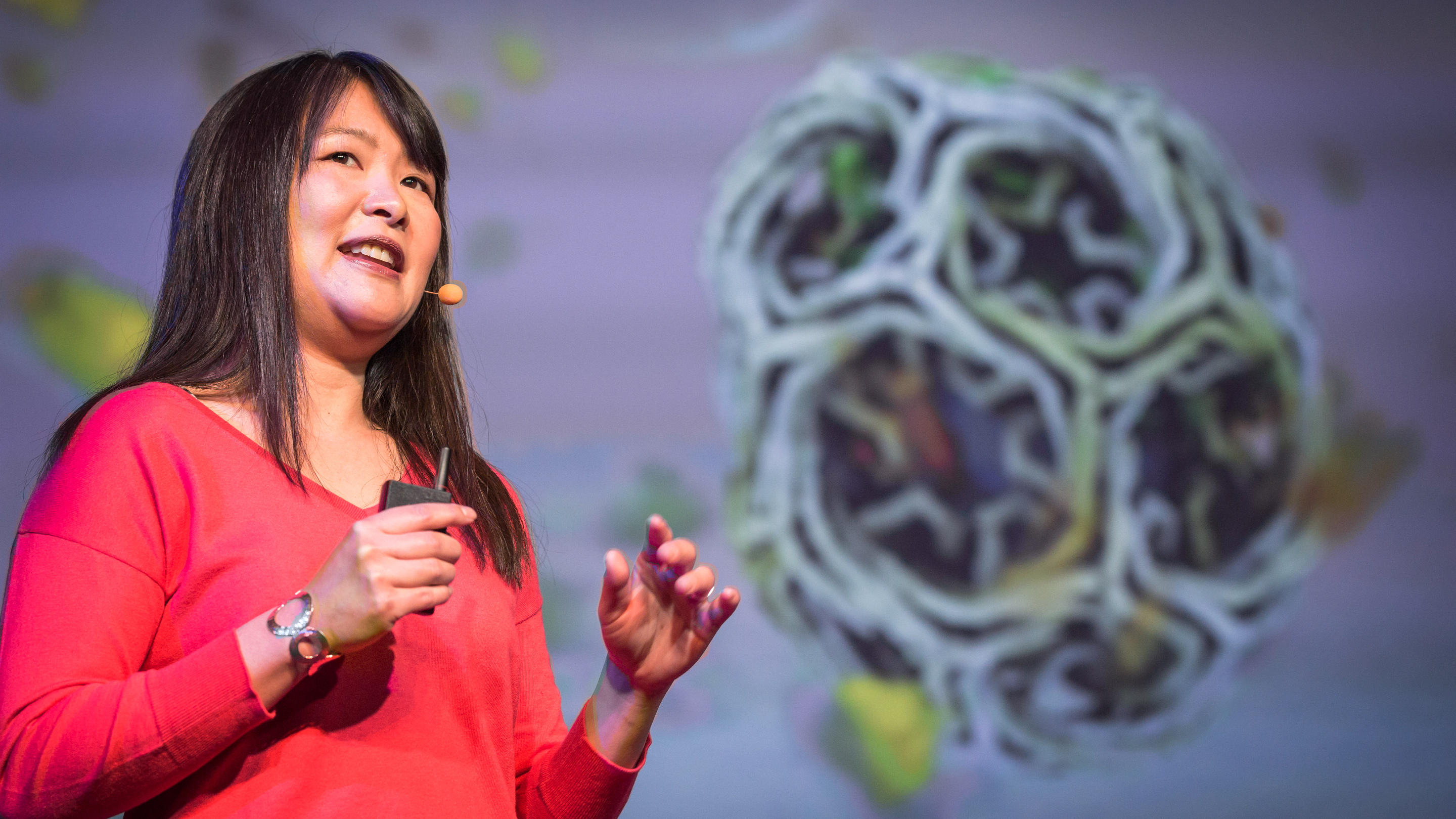Janet Iwasa: How animations can help scientists test a hypothesis thumbnail