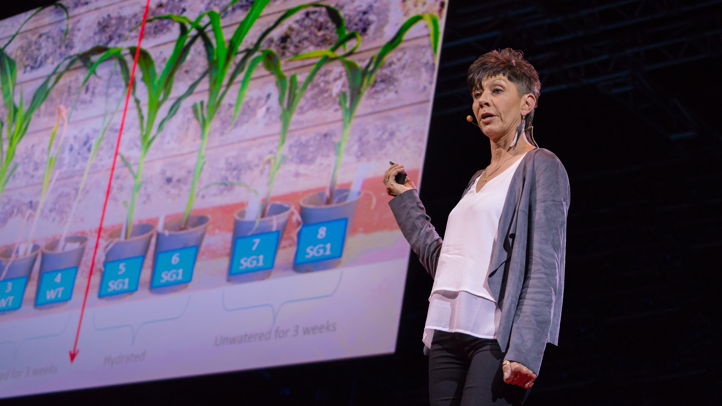 Jill Farrant: How we can make crops survive without water thumbnail